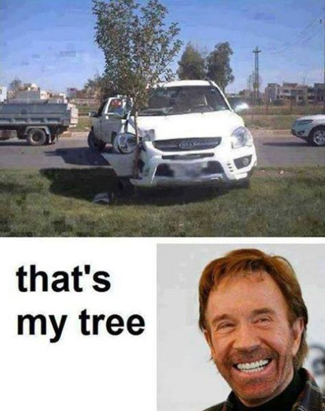 Chuck Norris's Tree - Funny pictures