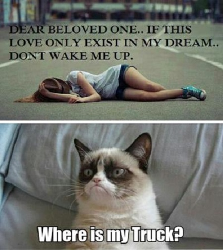 Dream Love - Funny pictures