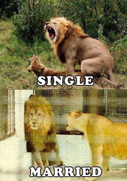 Single vs. Married - Funny pictures