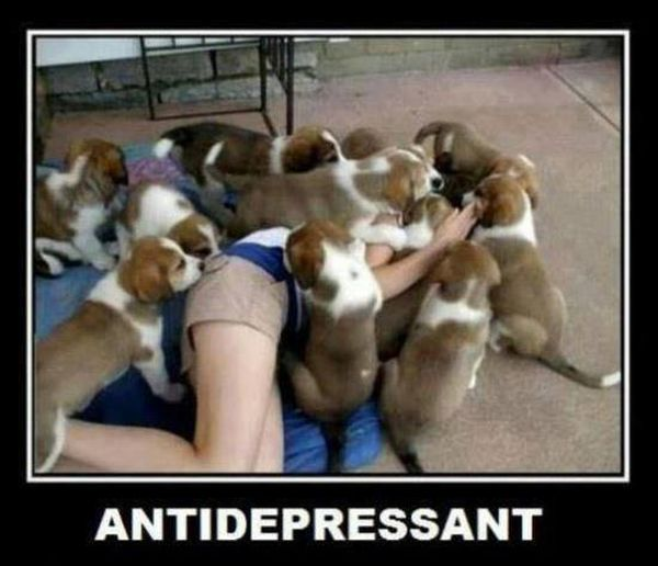 Antidepressant - Funny pictures
