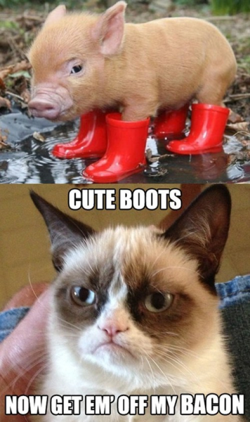 Bacon In Boots - Funny pictures