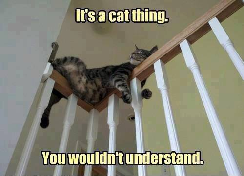 It's a Cat Thing - Funny pictures
