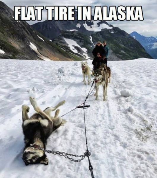Flat Tire In Alaska - Funny pictures