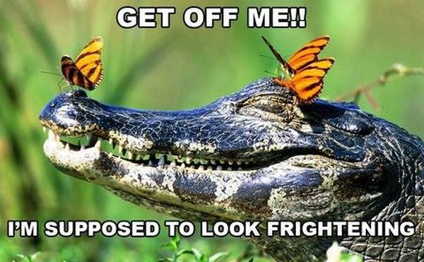 Get Off Me! - Funny pictures