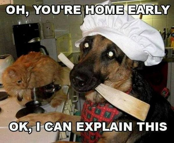 Meanwhile In The Kitchen