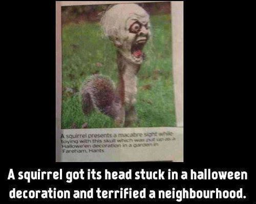 Halloween Squirrel - Funny pictures
