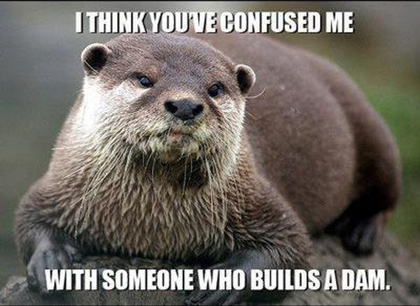I Think You've Confused Me With Someone Who Builds A Dam - Funny pictures