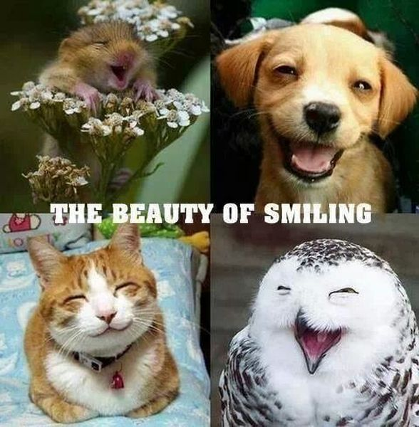 The Beauty Of Smiling - Funny pictures