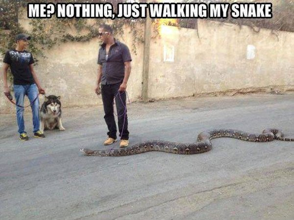 Snake Walking - Funny pictures
