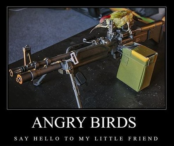 Angry Birds - Funny pictures