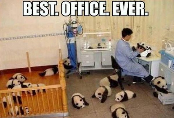 Best Office Ever - Funny pictures