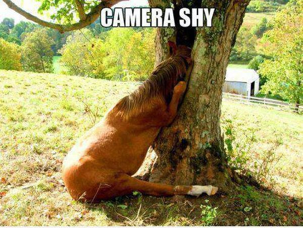 Camera Shy - Funny pictures