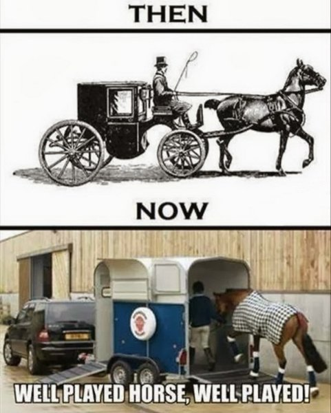 Well Played Horse - Funny pictures