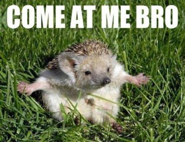 Come At Me Bro! - Funny pictures