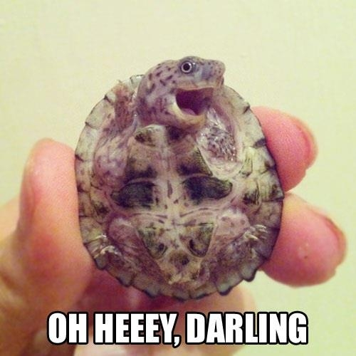 Oh Heeey, Darling! - Funny pictures