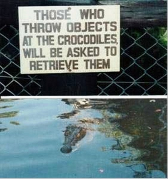 Don't Throw Object At The Crocodiles - Funny pictures