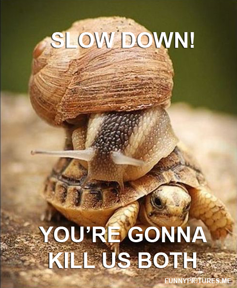 Slow Down! - Funny pictures