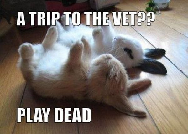 A Trip To The Vet? - Funny pictures