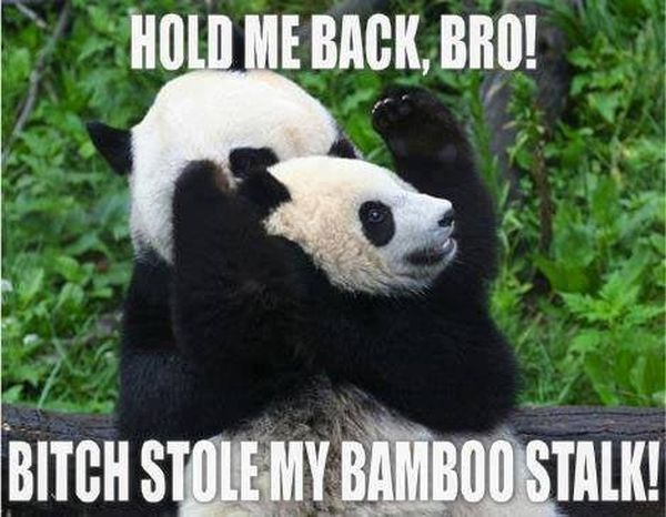 Hold Me Back Bro! - Funny pictures