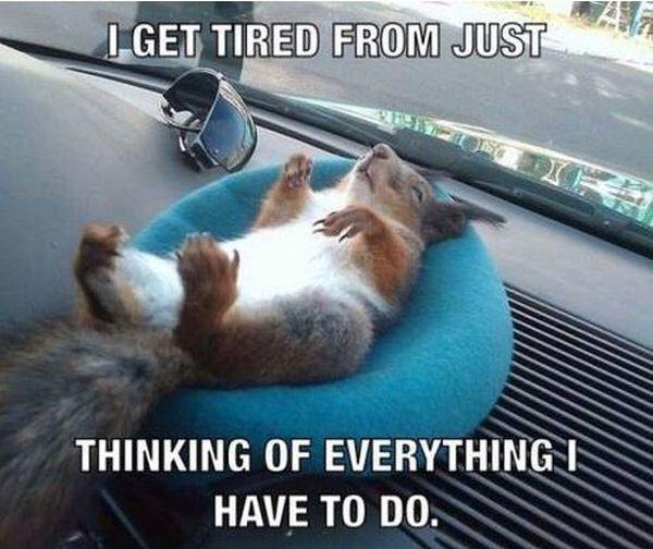 I Get Tired From Just Thinking - Funny pictures