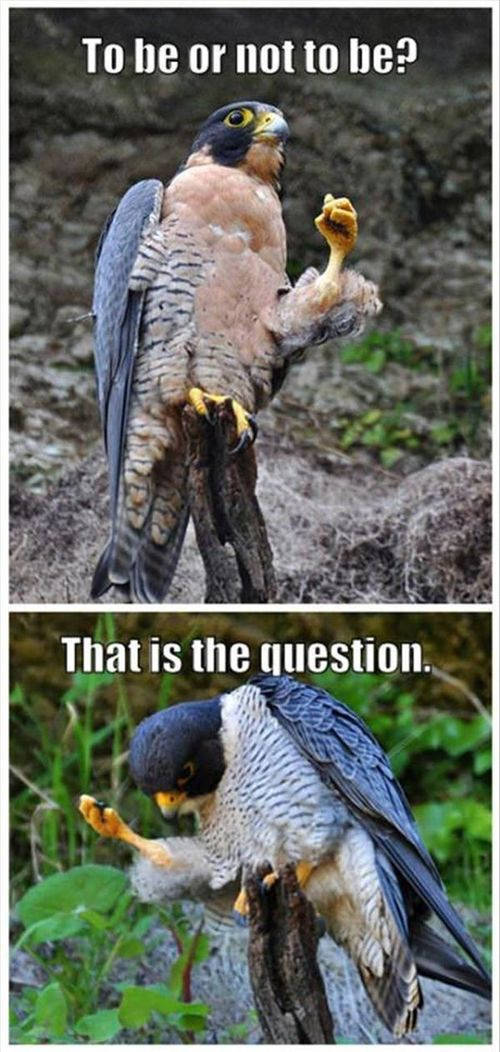 To Be Or Not To Be - Funny Pictures