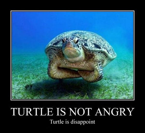 Turtle Is Not Angry - Funny pictures