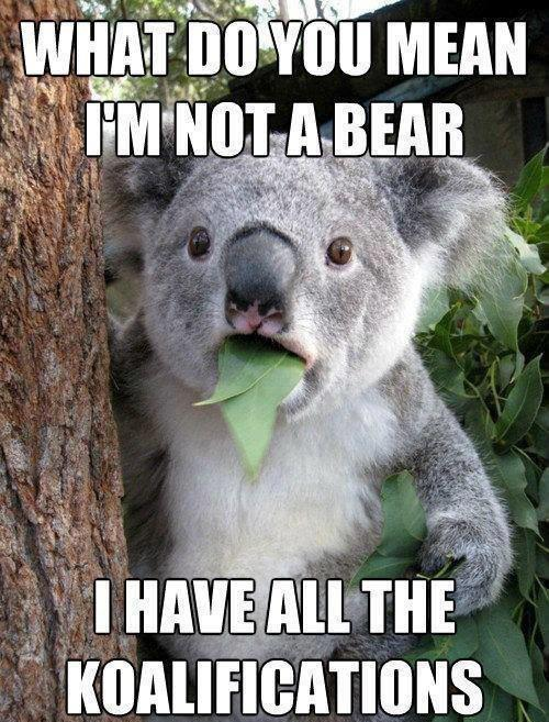 What Do You Mean I'm Not A Bear? - Funny pictures