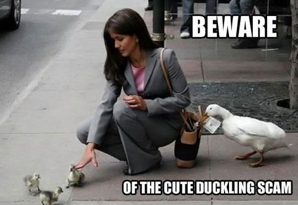 Beware - Funny pictures
