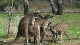 Meanwhile In Australia… - Funny pictures