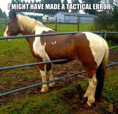 Tactical Error - Funny pictures