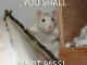 You Shall Not Pass - Funny pictures
