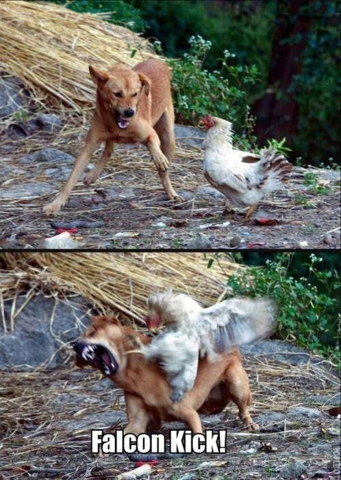 Badass Chicken - Funny pictures