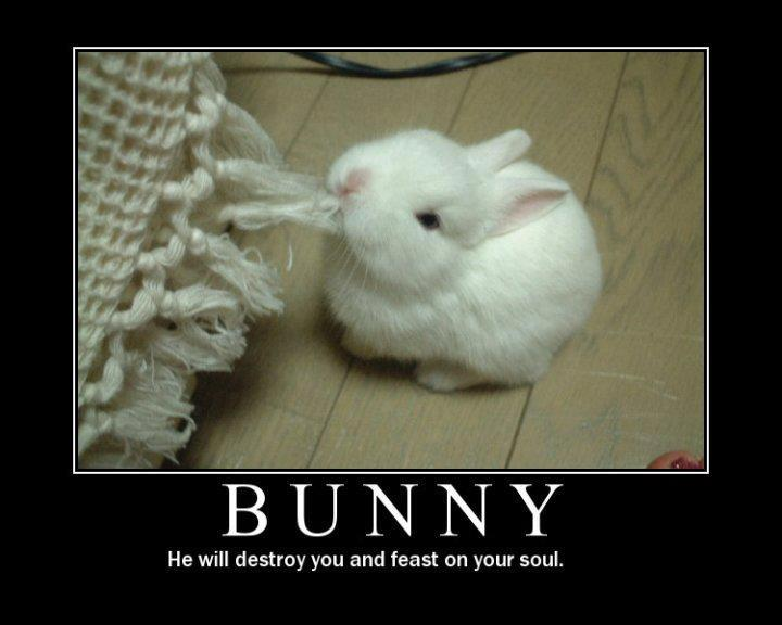 Bunny - Funny pictures