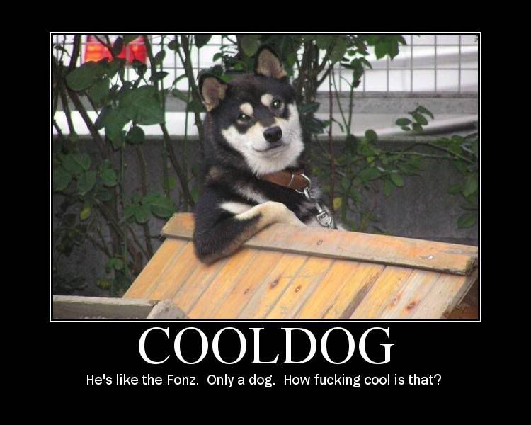 Cool Dog - Funny Pictures