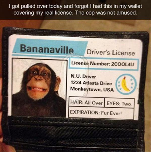 Bananaville Driver's License - Funny pictures