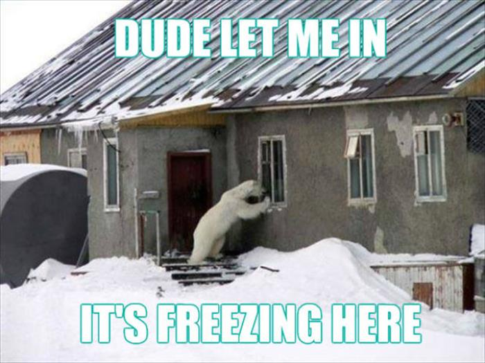 Dude Let Me In - Funny pictures