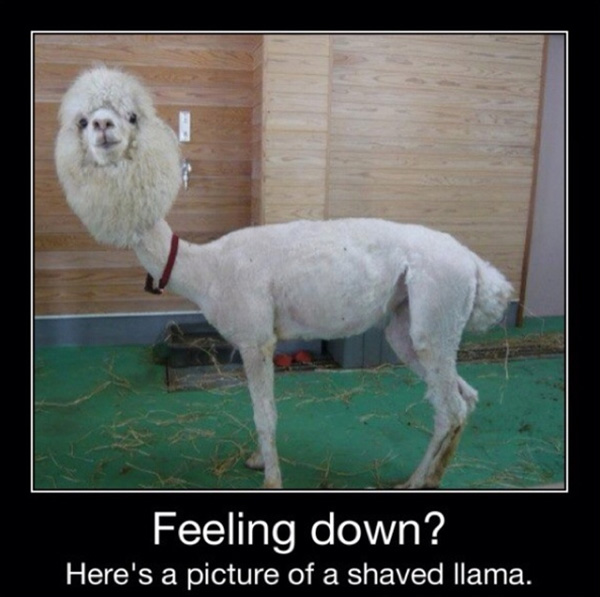 Feeling Down? - Funny pictures