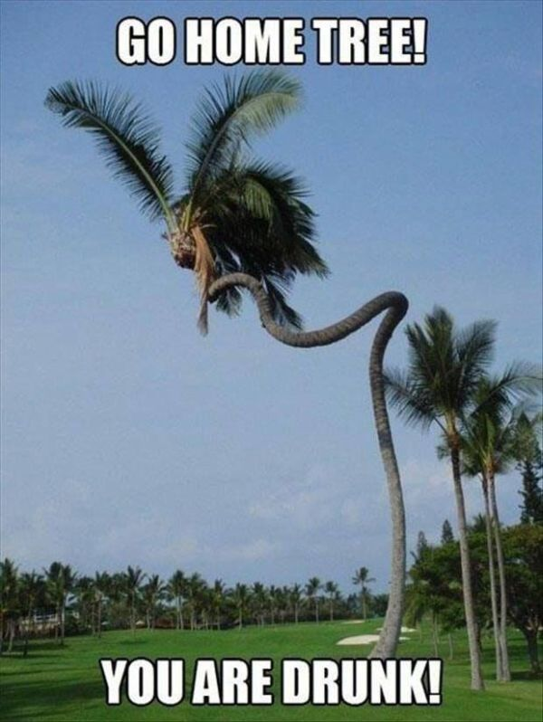Go Home Tree - Funny pictures