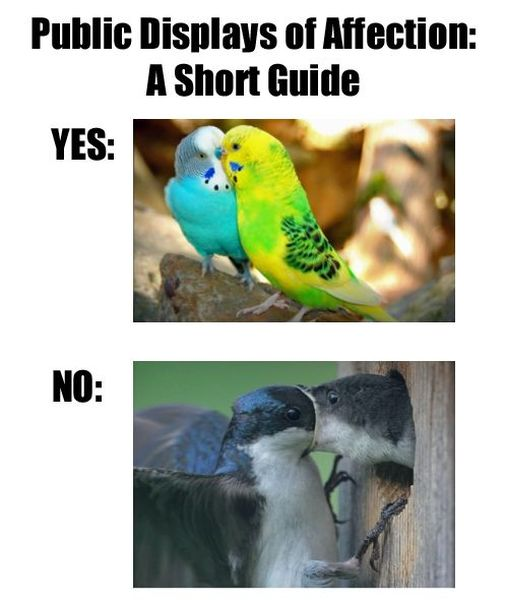 Public Displays Of Affections - Funny pictures