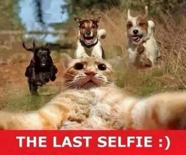 The Last Selfie - Funny pictures