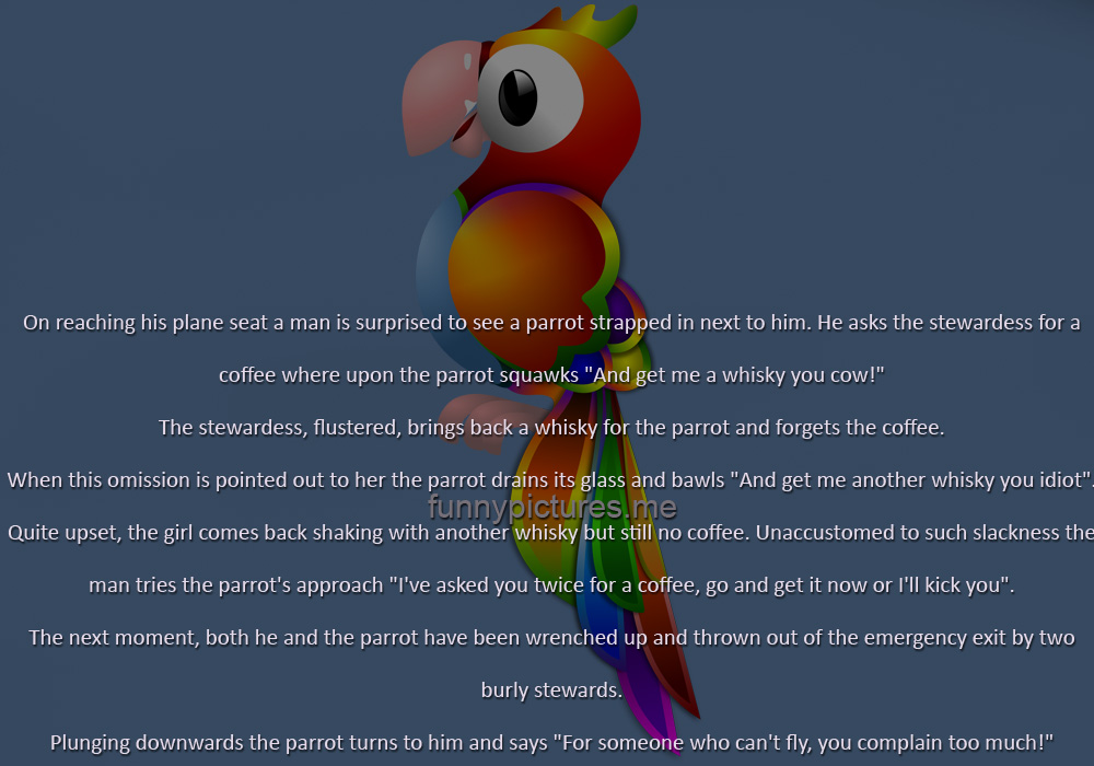 A Parrot On The Plane - Funny pictures