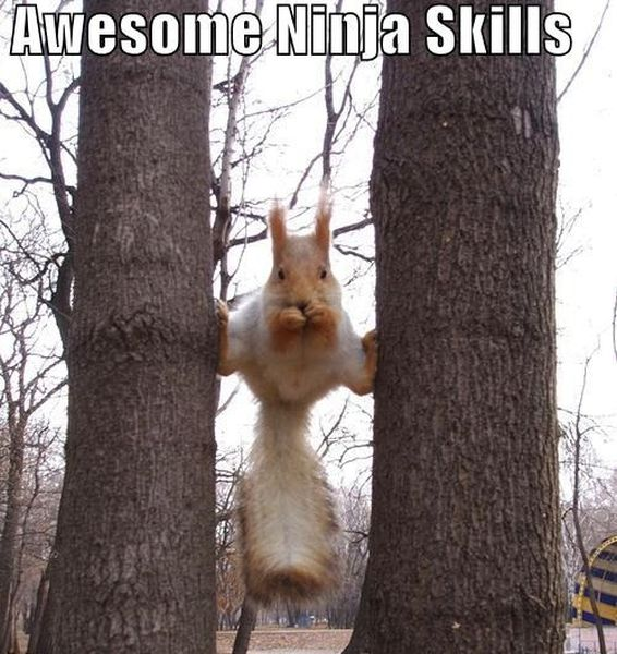 Ninja Squirrel - Funny pictures