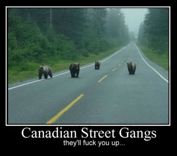 Canadian Street Gangs - Funny pictures