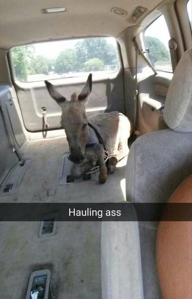 Hauling Ass - Funny pictures