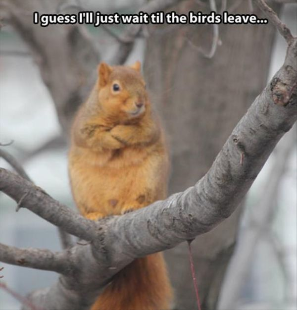 I Guess I'll Just Wait... - Funny pictures
