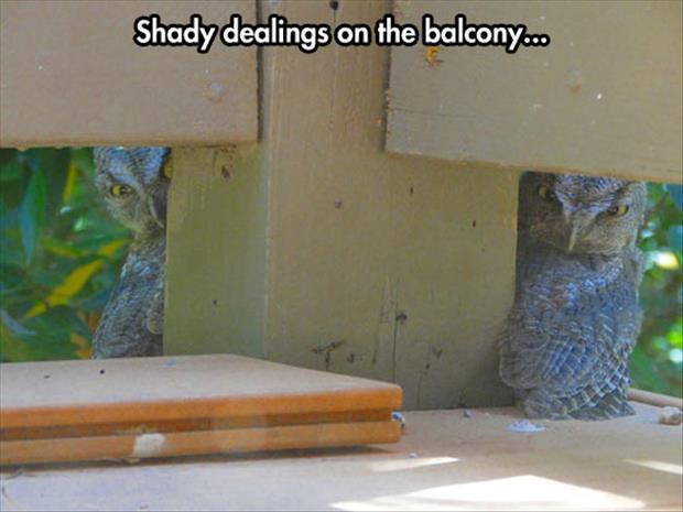 Shady Dealing On The Balcony - Funny pictures