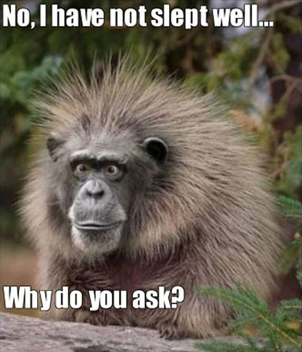 Why Do You Ask? - Funny pictures