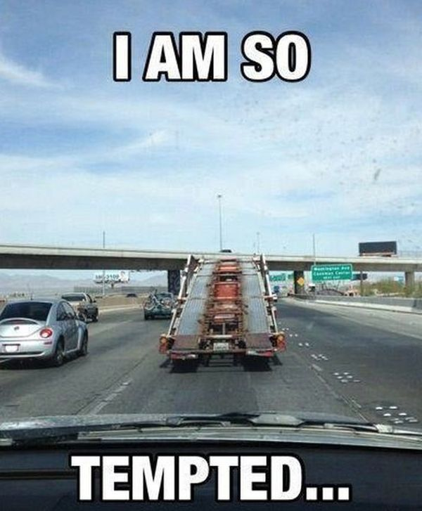 I Am So Tempted - Funny pictures