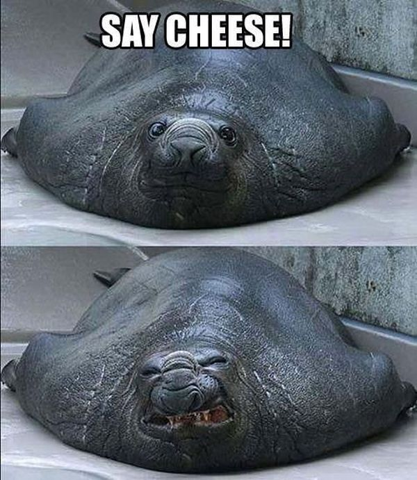Say Cheese - Funny pictures