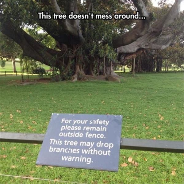 This Tree Doesn't Mess Around - Funny pictures